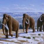 Животные на бурятском и русском языках